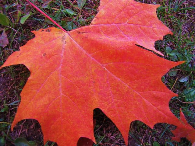 Une feuille d'automne.