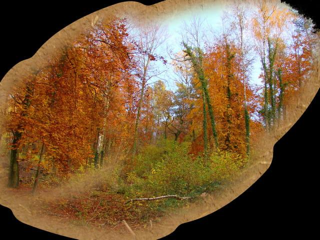 Une feuille d'automne