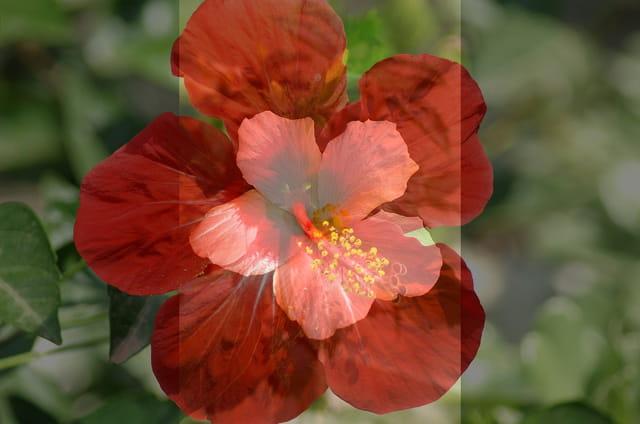 Une fleur dans la fleur