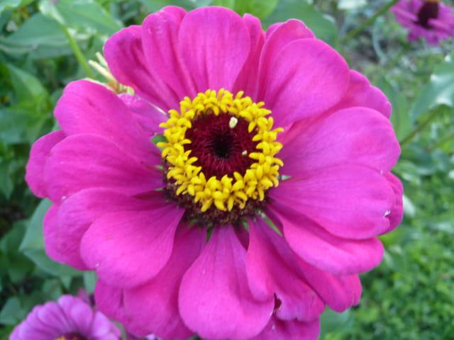 Une fleur dans une fleur