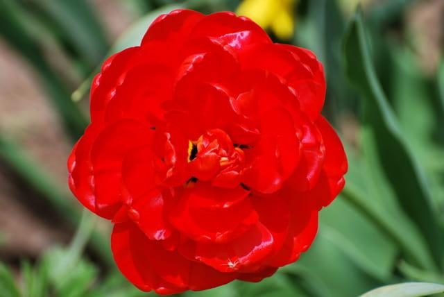 Une fleur éclatante.