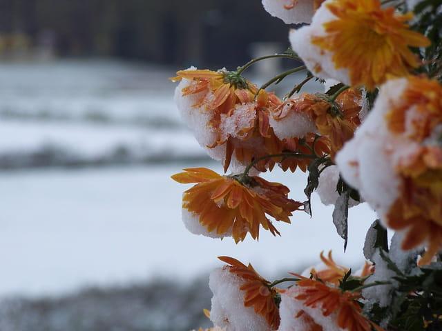 Une fleur en hiver