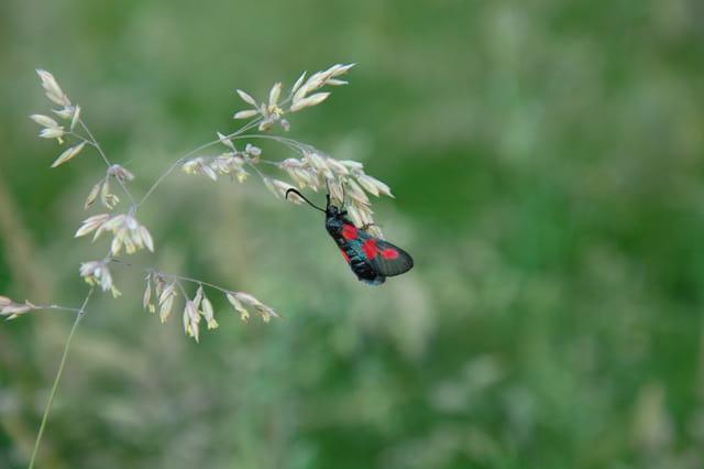 Une mouche à pois rouges.
