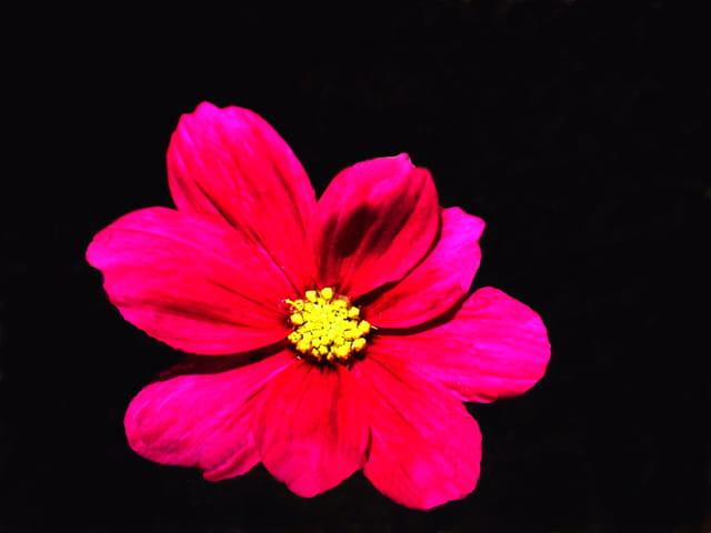 Une petite fleur esseulée