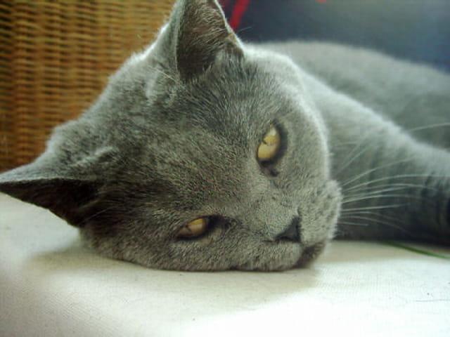 Une petite sieste