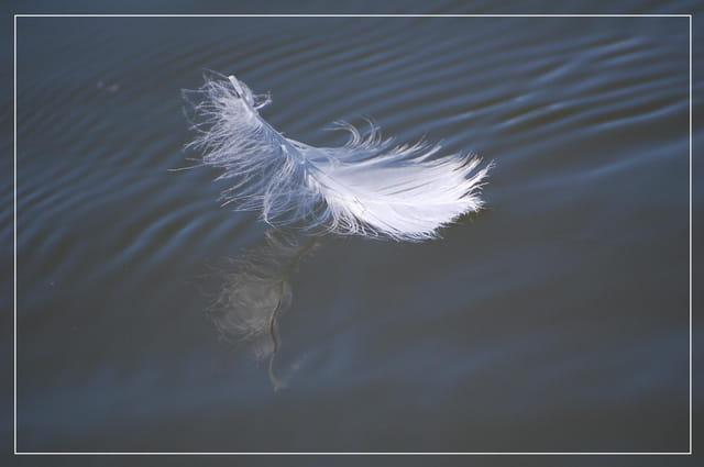 Une plume au fil de l'eau