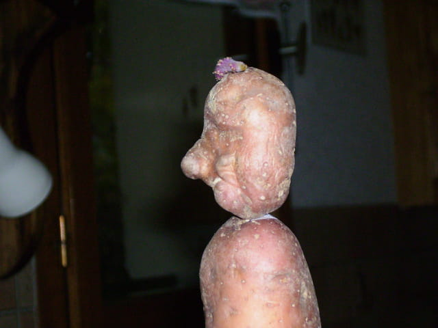 Une Pomme de terre à forme humaine