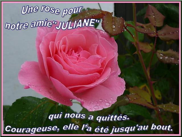 Une rose pour notre amie Juliane