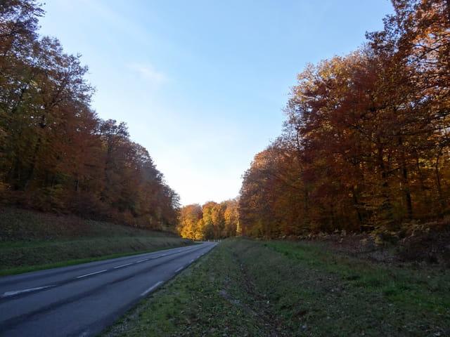Une route à l'automne