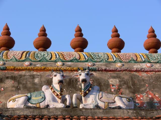 Vaches sacrées sur un temple hindou