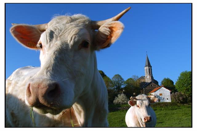 Vaches&village