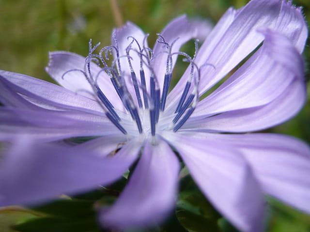 Valse florale