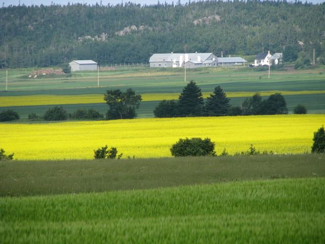 Variation en jaune et vert