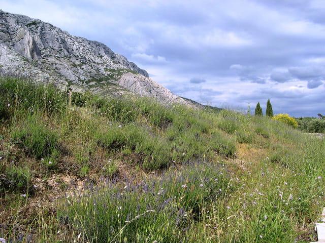 Végétation au pied de la Montagne Sainte-Victoire