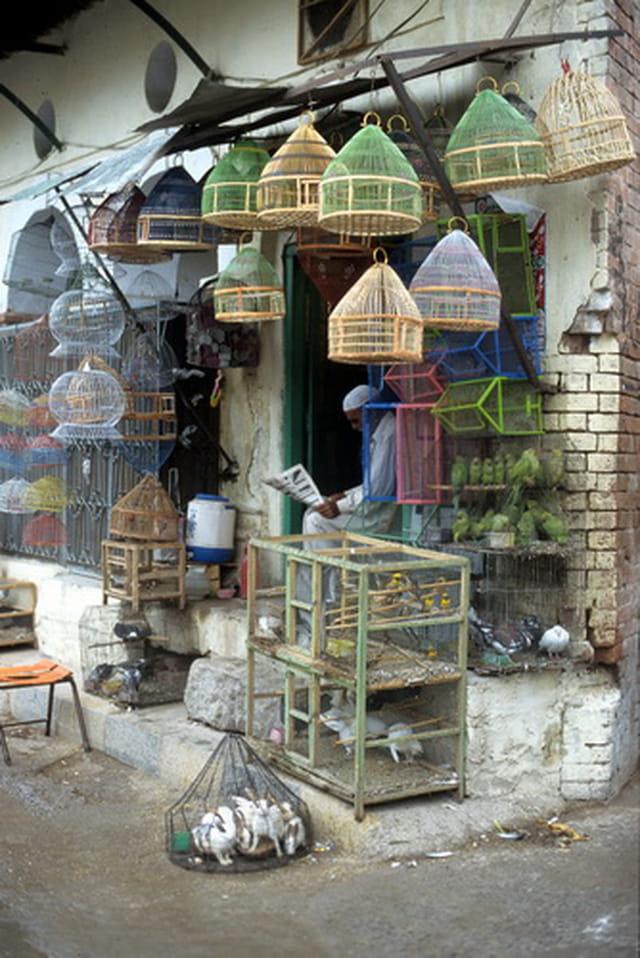 Vendeur d'oiseaux