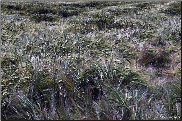 Vent dans les blés