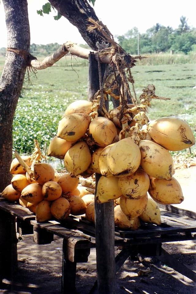 Vente de noix de coco
