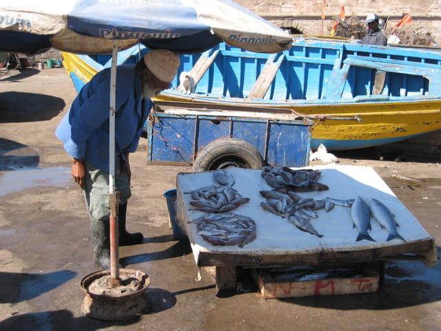 Vente de poissons par jean pierre marro sur l 39 internaute for Vente de poisson