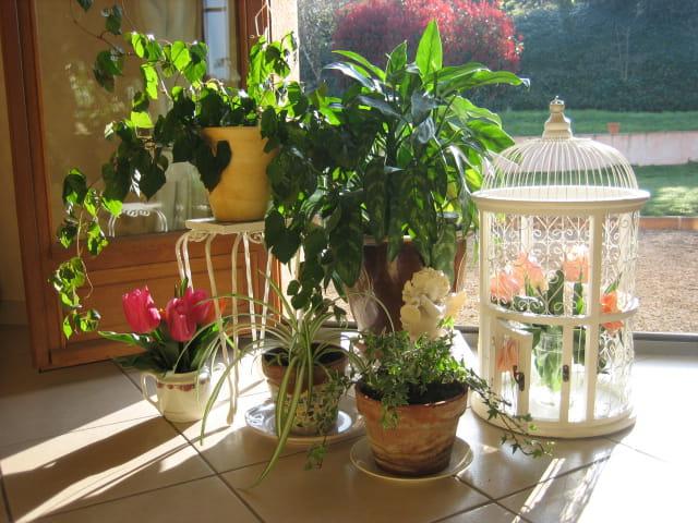 Verdure dans la maison