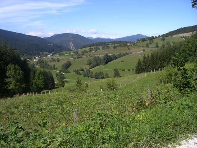 Verdure de moyenne montagne