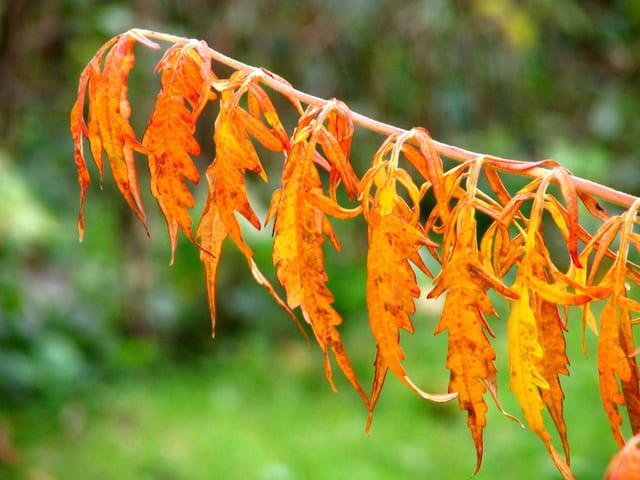 Vers l'automne