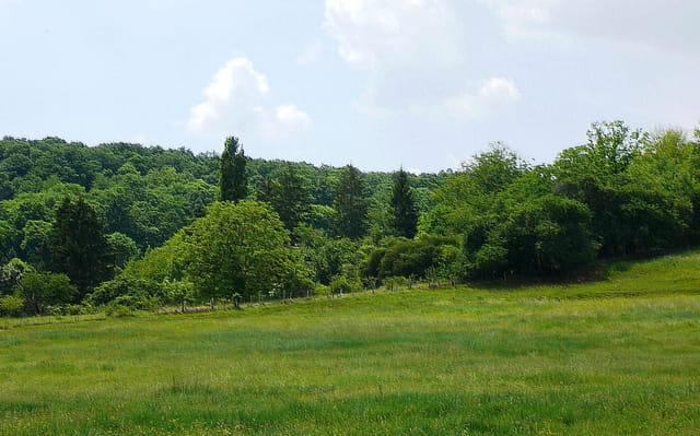 Vert pâturage de Normandie