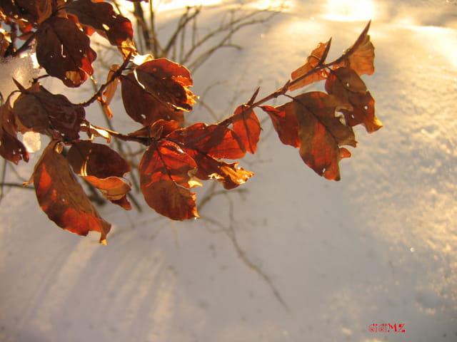 Vestige d'automne