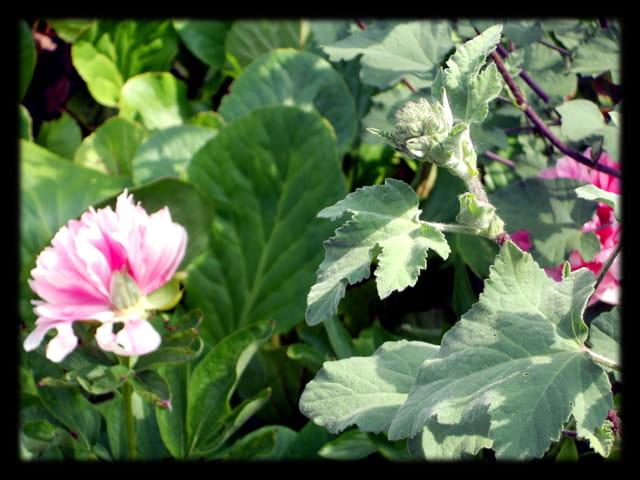 Vgx-Fleurs 17 - Pivoines et branche inconnue