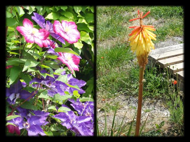 Vgx-Fleurs 18 - Fleurs inconnues