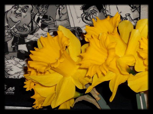 Vgx-Fleurs 2 - Jonquilles
