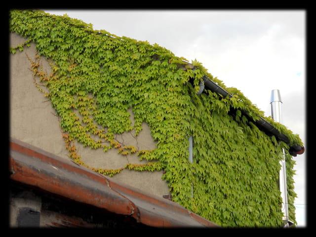 Vgx-PlantesGr 3 -  Plantes dévoreuses de fascade