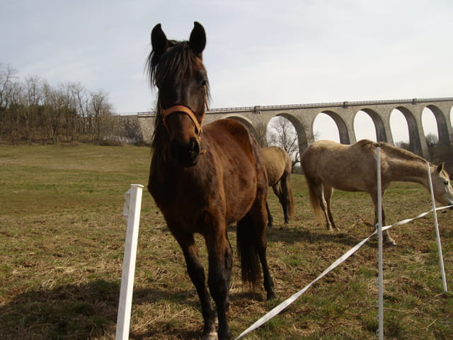 Viaduc et chevaux