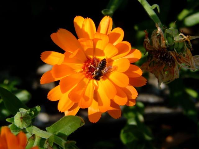 Vie de fleur