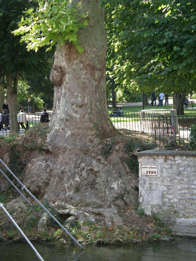Vieil arbre à Vendôme
