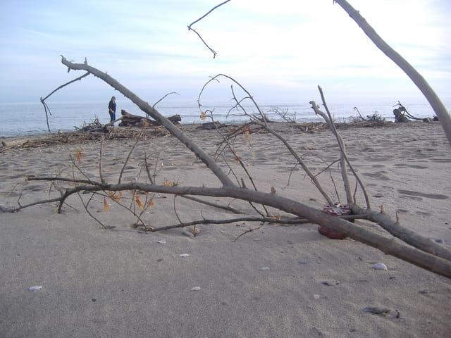 Vieille branche échouée