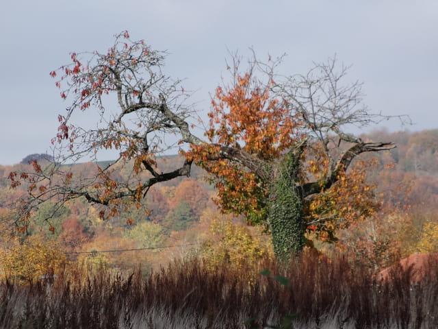 Viel arbre en automne