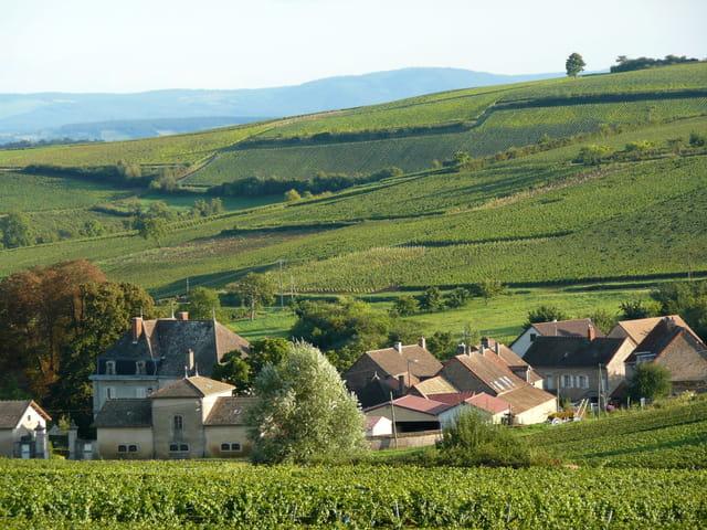 Vignes et hameau bourgeois