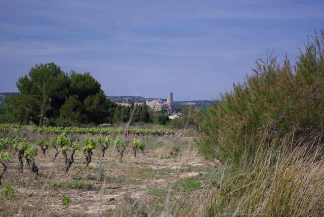 Vignes et Tour Barberousse