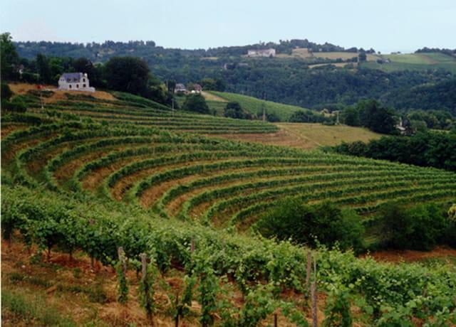 Vignoble en Jurançon