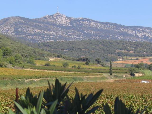 Vignobles de Saint-Saturnin