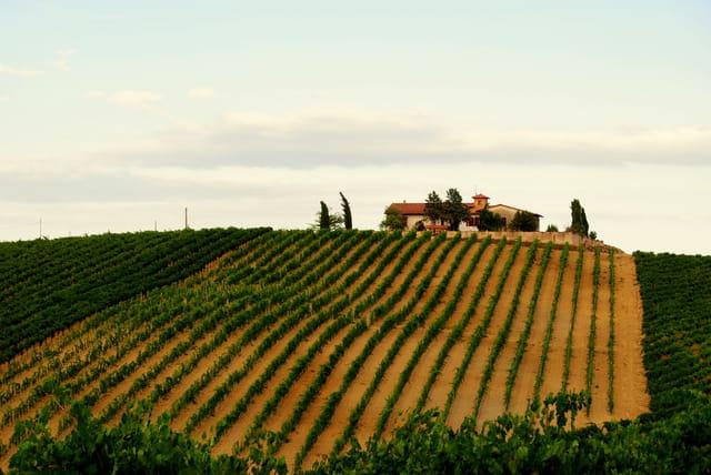 Vignobles de Toscane