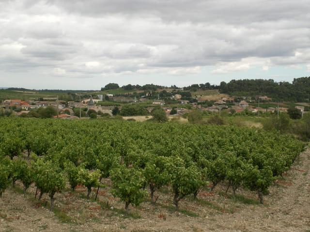 Villeneuve en Minervois et ses vignes