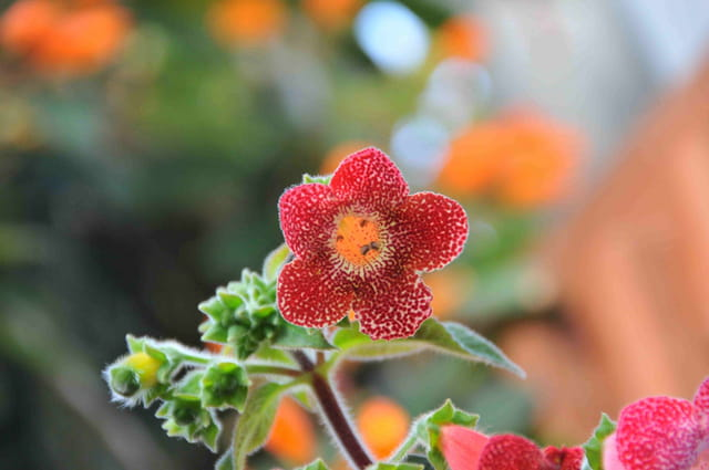 Visage en fleur