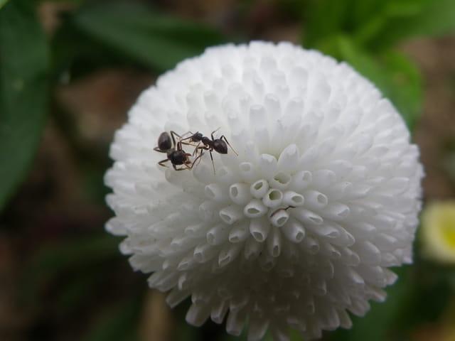 Visite à une jolie fleur