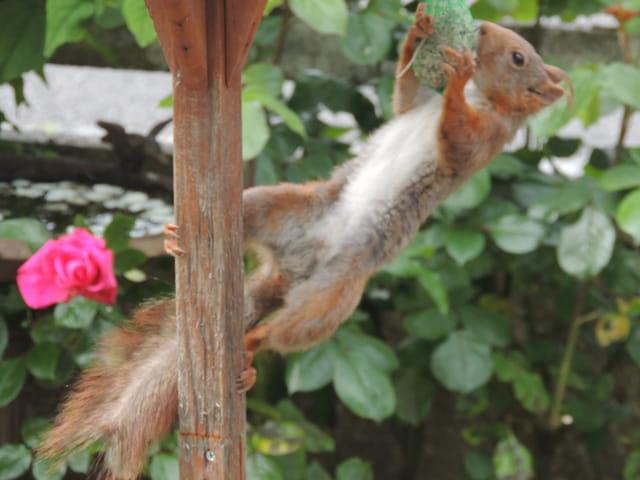 Visite insolite au jardin