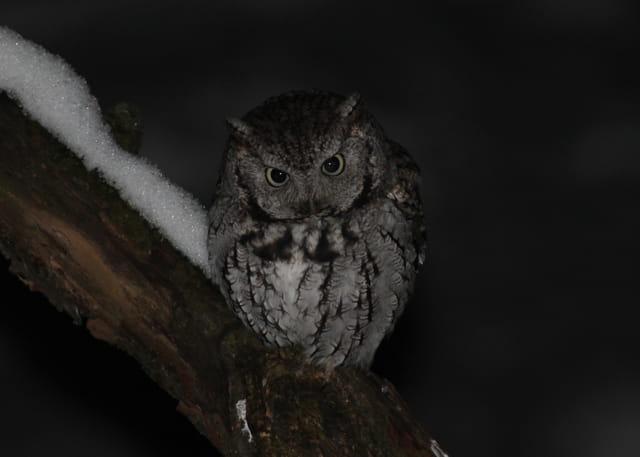 Visiteur de la Nuit