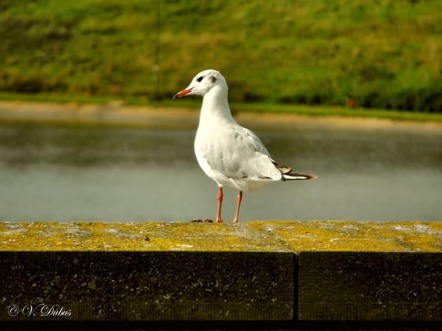 Visiteur du Canal d'Ittre