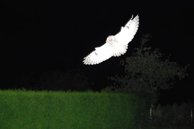 Visiteur du soir