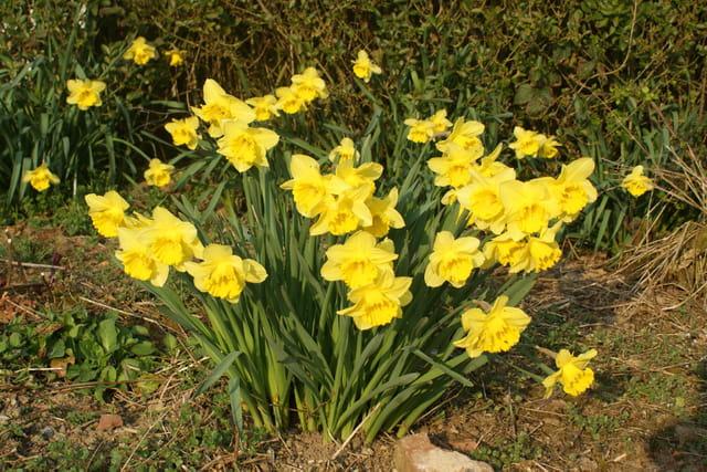 Vivacité du printemps