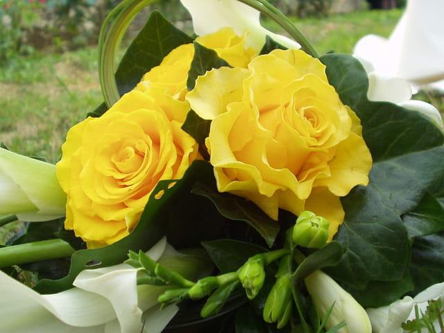 Voici des roses jaunes...